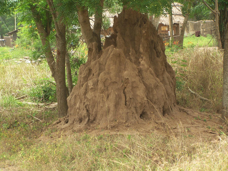 Termitenhügel am Rand des Dorfes